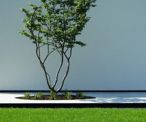 Eenvoud siert! Deze meerstammige springt onmiddellijk in het oog t.o.v. de witte gevel en in beton gegoten terras. Let ook op de afwerking waarin deze meerstammige zich bevindt. Dit kan alleen maar met het werk van echte vakmannen.